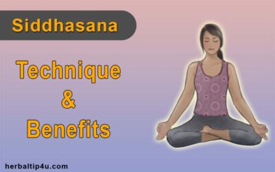 herbal tip 4u  sheershasana headstand pose techniques