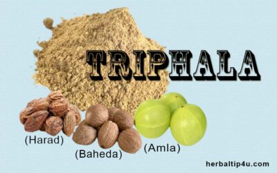 What is Triphala? Health Benefits, Dosage and Side Effects
